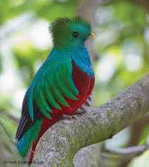 The Aztec-named green and red quetzal.